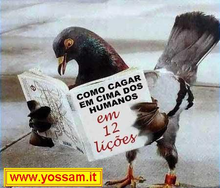 info_piccioni.jpg
